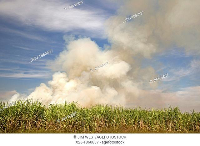 Franklin, Louisiana - Sugar cane fields being burned at harvest time in southern Louisiana