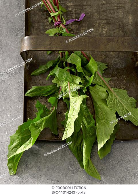 A bunche of fresh red dandelion leaves on a metal tray