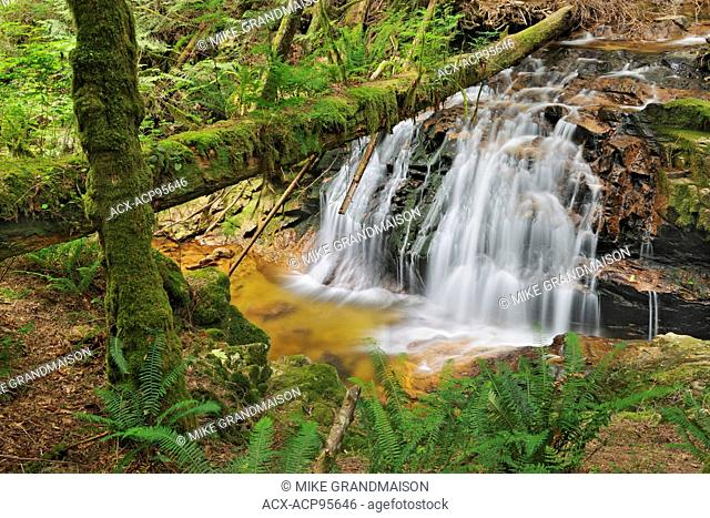 Waterfall in rain forest of Cliff Gilker Park Gibsons British Columbia Canada