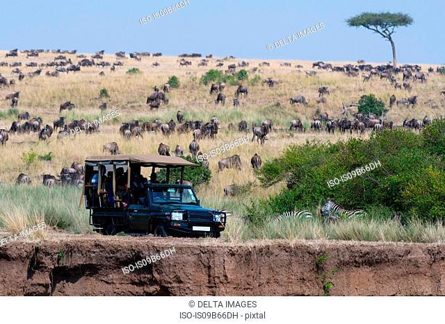 A safari vehicle in theMasai Mara National Reserve, Kenya, Africa