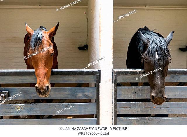 Chile, Regio de Antofagasta, San Pedro de Atacama, horses in San Pedro de Atacama