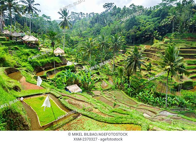 Tegallalang rice field. Bali. Indonesia, Asia