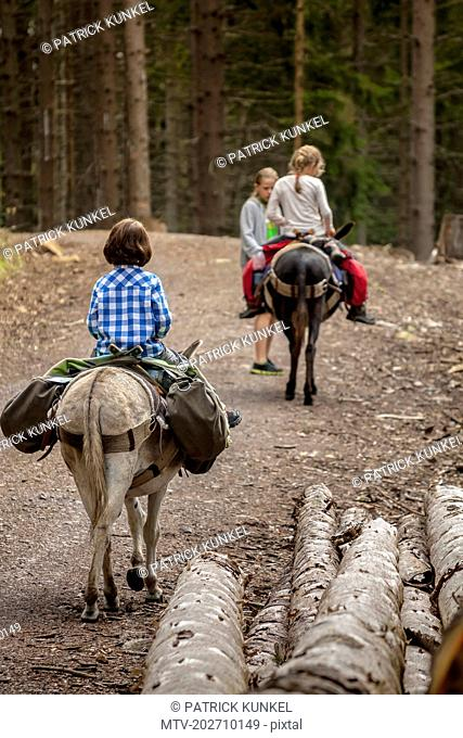 Girls on a hiking tour with donkeys in the black forest