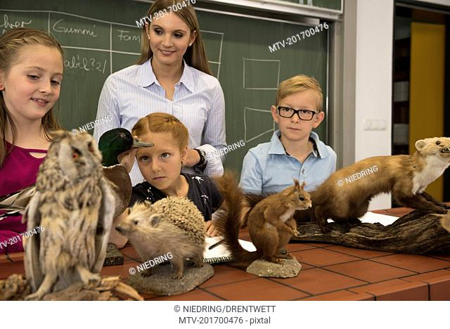 Students with teacher examining stuffed animals in a biology class, Fürstenfeldbruck, Bavaria, Germany