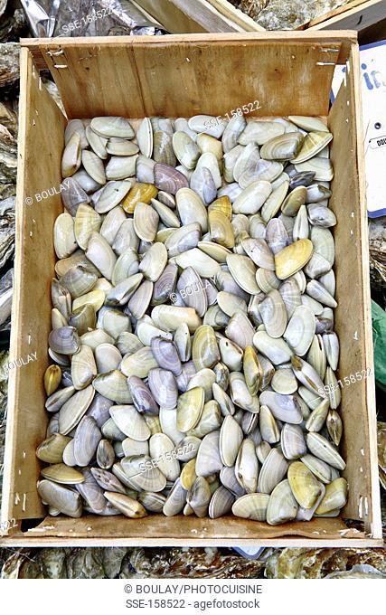Crate of Tellin shellfish
