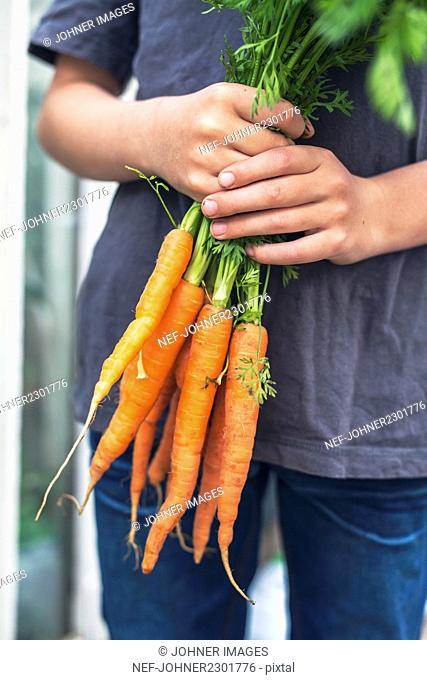 Boy holding bunch of carrots