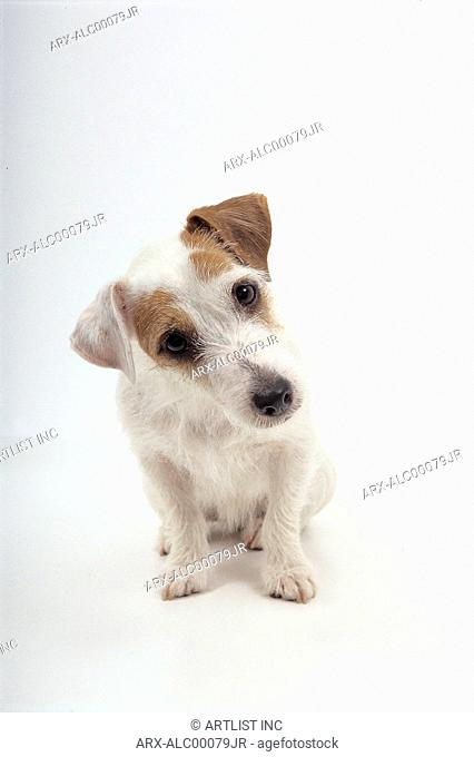 A sitting puppy leaning its head