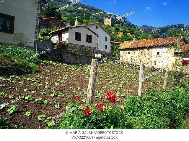 Market garden. Linares, Cantabria, Spain