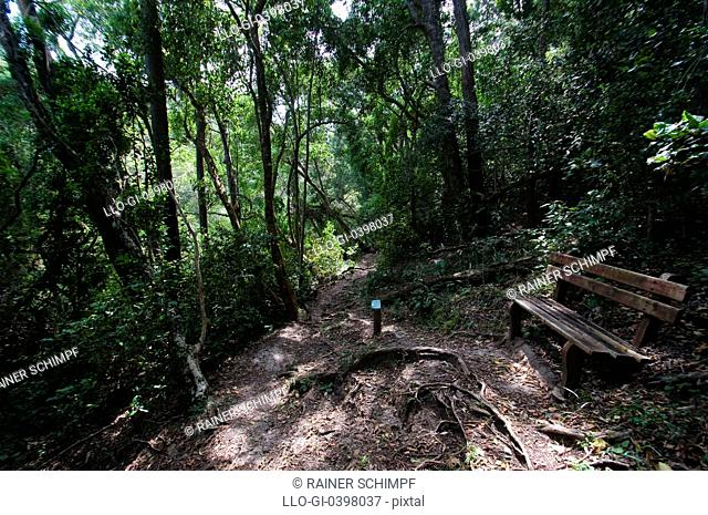 Trail through forest bench to rest, Tsitsikamma National Park Eastern Cape Province, South Africa