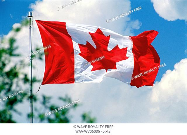 Canadian flag with white clouds, blue sky, partial tree