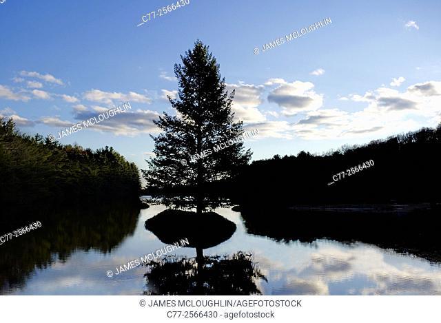 Landscape, waterscape, tree