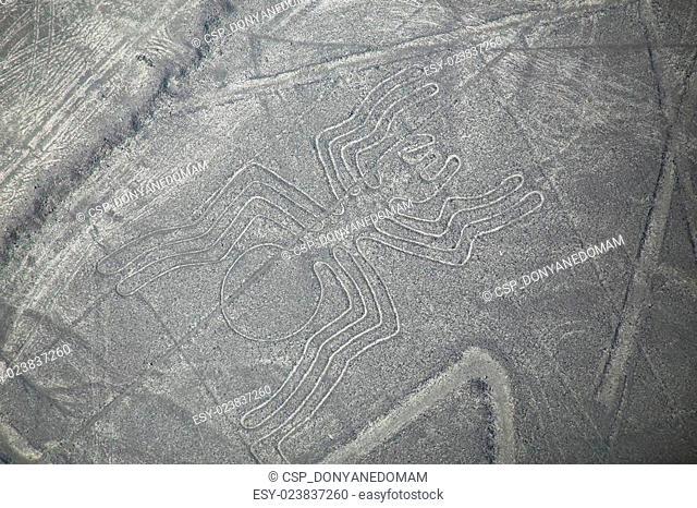 Aerial view of Nazca Lines - Spider geoglyph, Peru