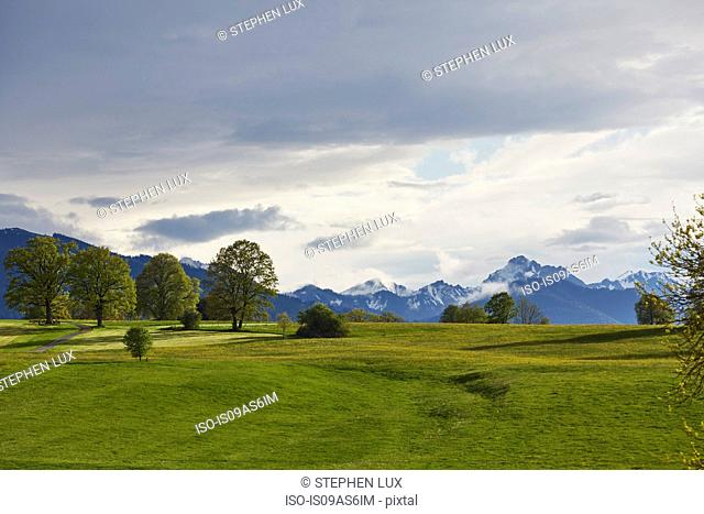 Landscape view of green fields and distant snow capped mountains, Uffing, Staffelsee, Bavaria, Germany