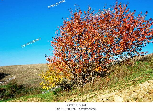 Red and yellow bush