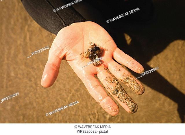 Mans hand holding seashell on the beach