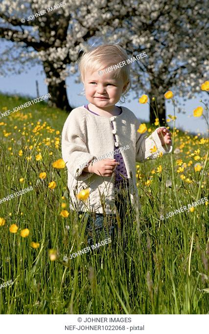 Switzerland, small girl (18-23 months) in meadow