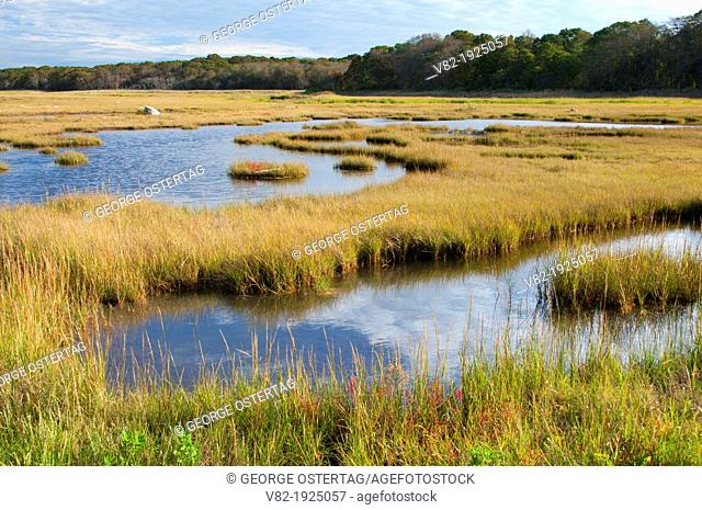 Salt water marsh, Barn Island Wildlife Management Area, Connecticut