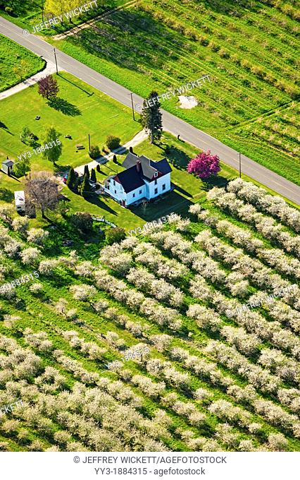 Birds-eye-view of farm house surrounded by cherry orchards in the spring time, Oceana county, Michigan, USA