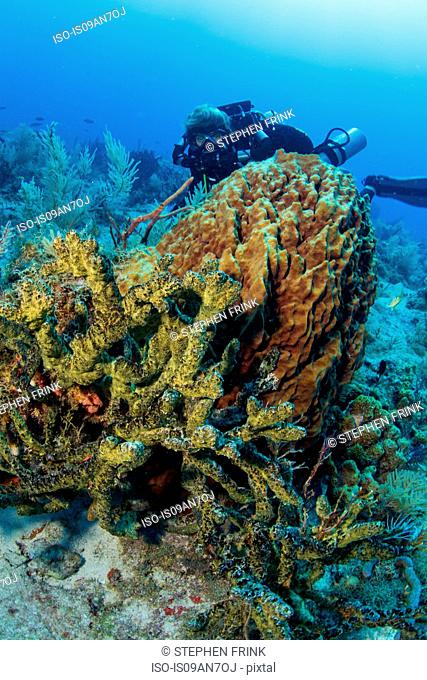 Diver views array of sponges