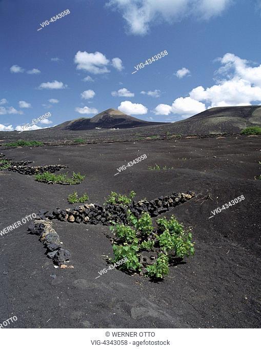 Spanien, Lanzarote, Kanarische Inseln, E-La Geria, Obstanbau, Weinanbau auf Vulkanasche, Feuerberge Spain, Lanzarote, Canary Islands, E-La Geria, wine growing
