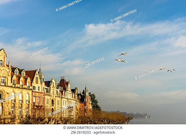 Whooper swan,(Cygnus cygnus) in flight over Lake Constance,Bodensee,Germany