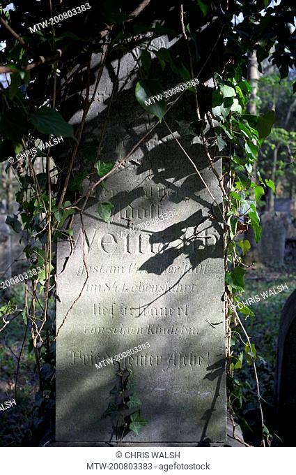 Gravestone Jewish cemetery Vienna overgrown ivy
