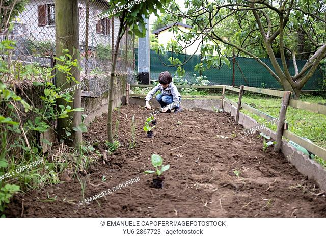 child preparing vegetable garden