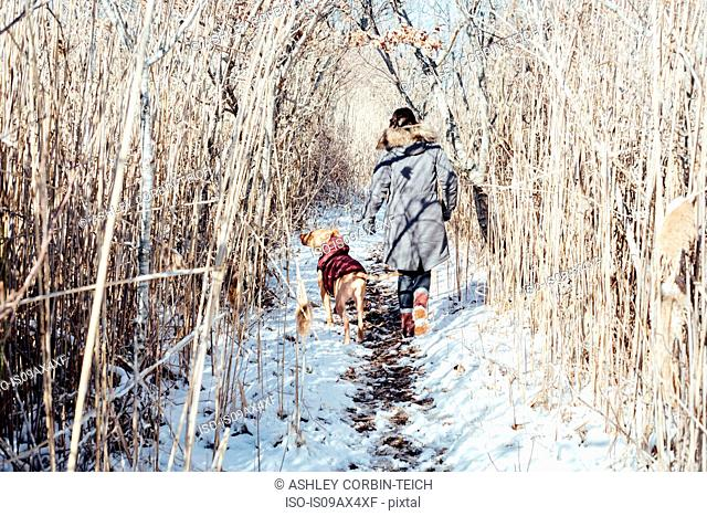 Full length rear view of woman with dog walking on snowy landscape
