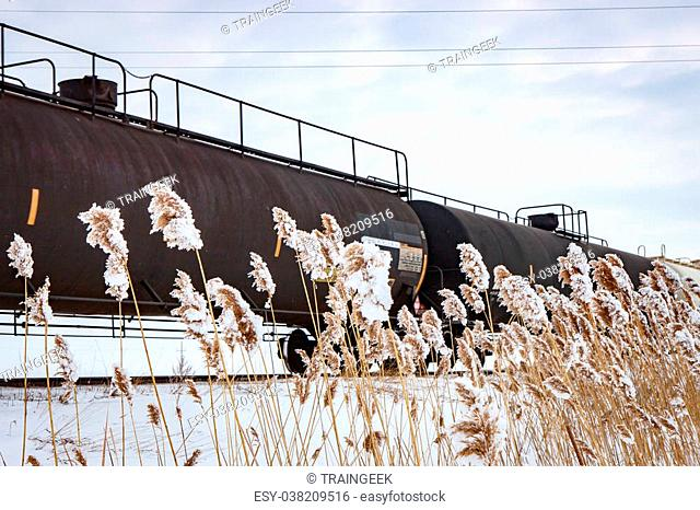 Railway Tank Cars Behind Frosty Weeds