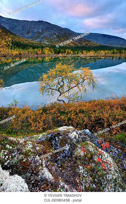 Autumn coloured landscape at Polygonal Lakes, Khibiny mountains, Kola Peninsula, Russia