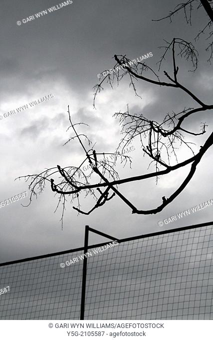 high fence and bare tree branches with dark sky