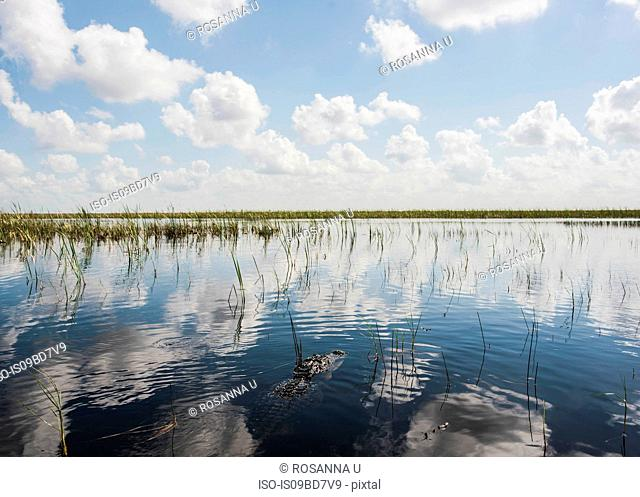 Scenic view from airboat tour on Everglades, Sawgrass recreation park, Florida, USA