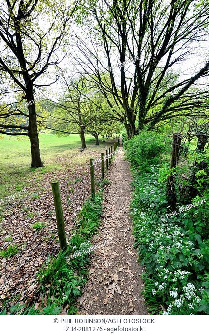 Boughton Monchelsea village, Maidstone, Kent, Public footpath through woodland