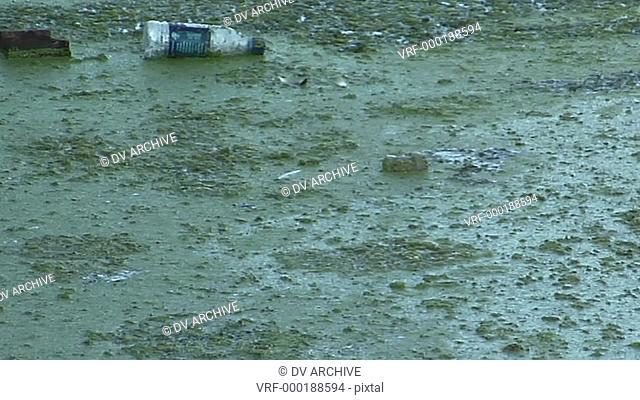 Garbage floats in a waterway full of algae