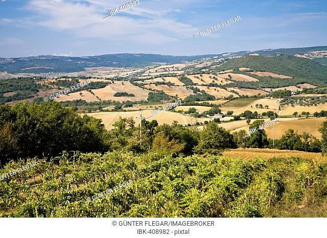 Scenery with mowed fields Tuscany Italy