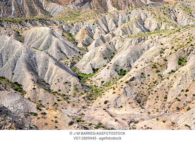 Badlands are a dry terrains formed with softer sedimentary rocks (clay), easy to erode by water or wind. This photo was taken in Desierto de Tabernas Natural...
