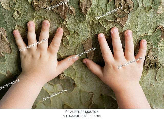 Toddler's hands touching tree bark
