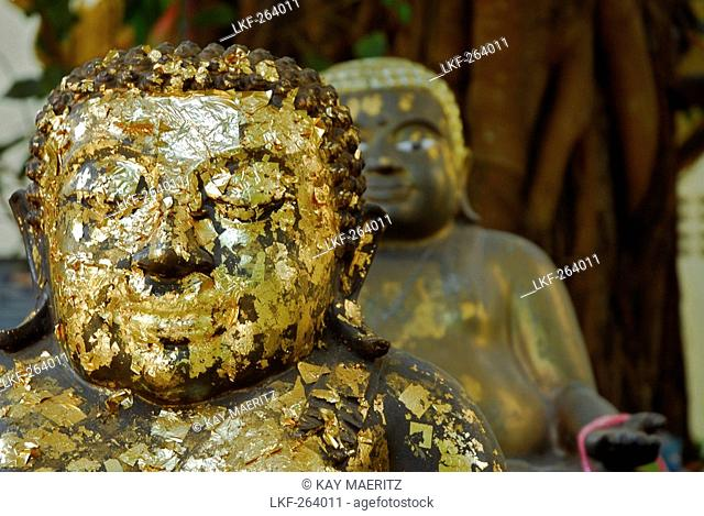 Chiang Rai, Wat Phra Kaeo, Buddhas with gold foil in the garden, Golden Triangle, Thailand, Asia