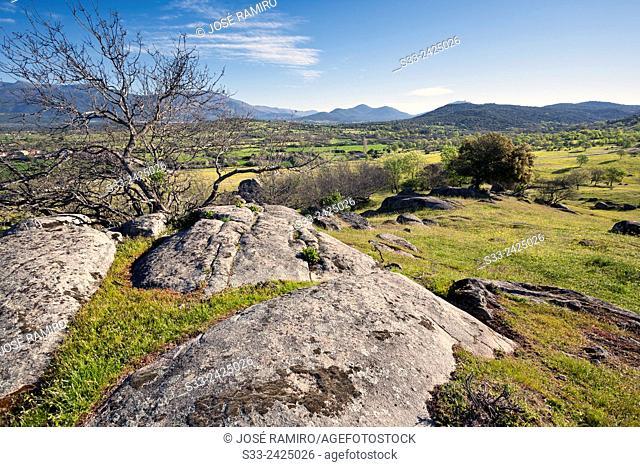 Sierra de Gredos from The Dehesas in Higuera de las Dueñas. Avila. Castilla Leon. Spain. Europe