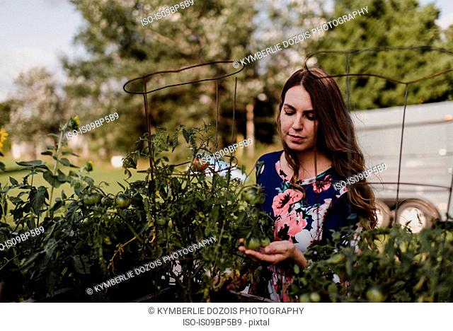 Woman checking on her tomato plants