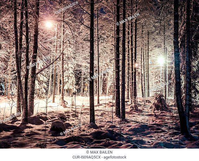 Snowy forest, at night, Lahti, Finland