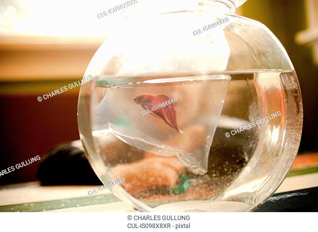 Goldfish bowl, close up