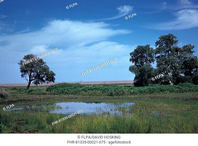 Europe - Spain View of Coto Donana / Dew pond / White Poplar / Marismas
