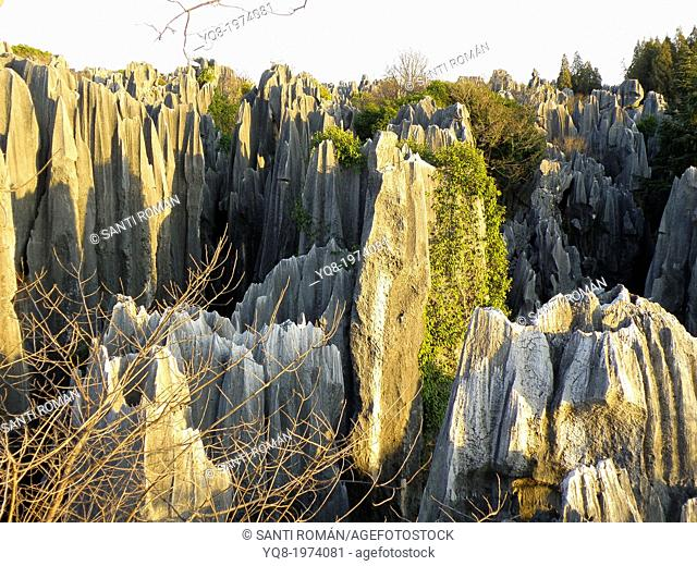 Shilin Stone Forest, UNESCO World Heritage Site, Yunnan Province, China, Asia