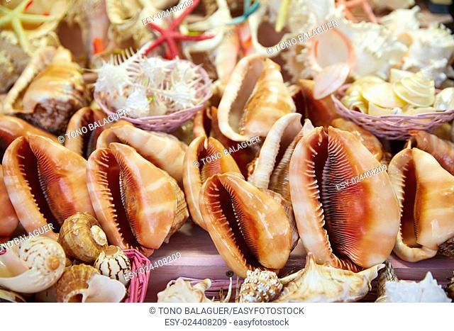 Sea shells and beach souvenirs starfish sea snails