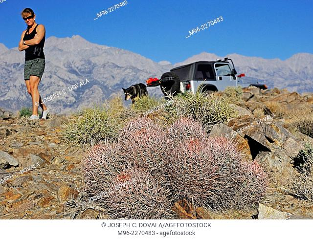 Barrel cactus in foreground with Sierra Nevada in background, Alabama Hills, California, USA