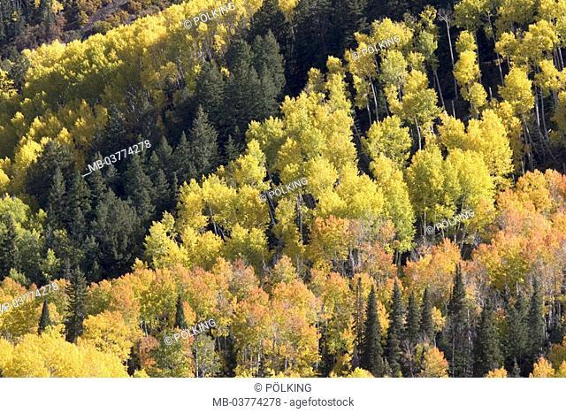 USA, Colorado, Aspen, San Juan,  Mountains, forest, autumn  North America,  United States of America, west Colorado, landscape nature season, autumnal