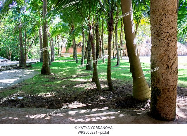 Park with palms, Xcaret, Mexico