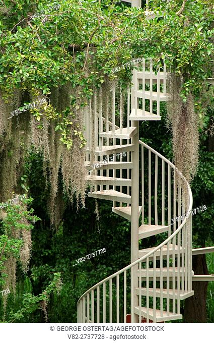Stairs on Canopy Trail, Santa Ana National Wildlife Refuge, Texas
