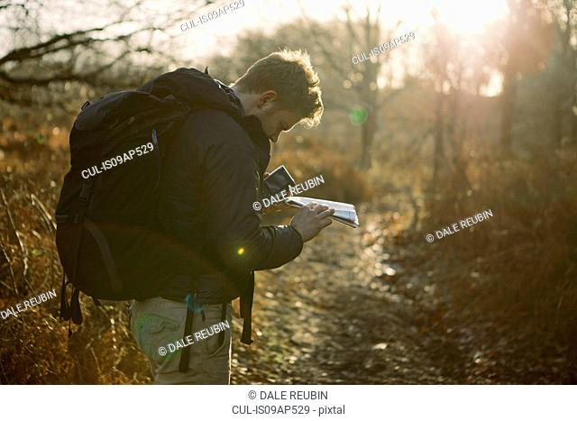 Male hiker reading map in sunlit woods
